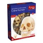 Coffret anatomie Crâne humain
